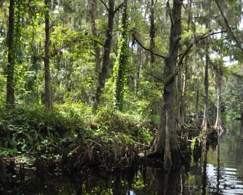 2-hour-airboat-tour